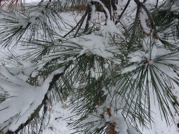 photo-090_neige.jpg