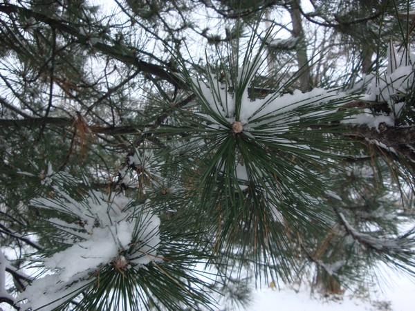 photo-093_neige.jpg
