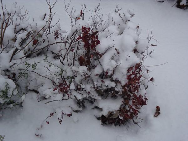 photo-100_neige.jpg
