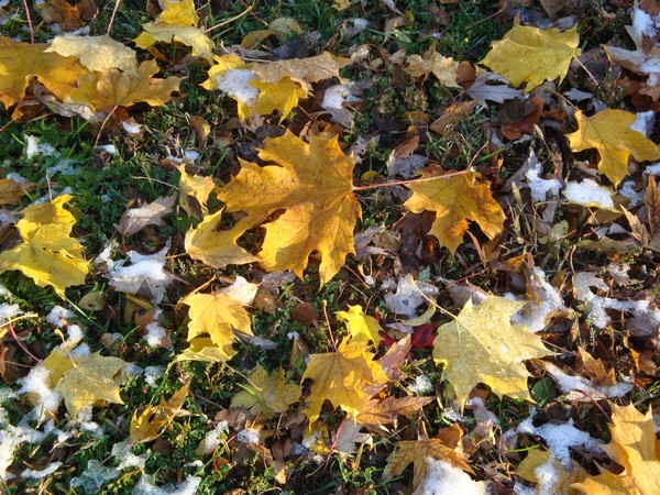 photo-119_octobre.jpg