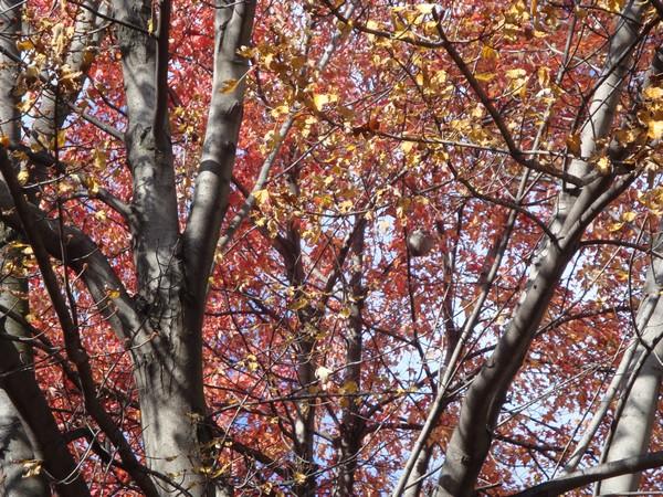 photo-165_octobre.jpg