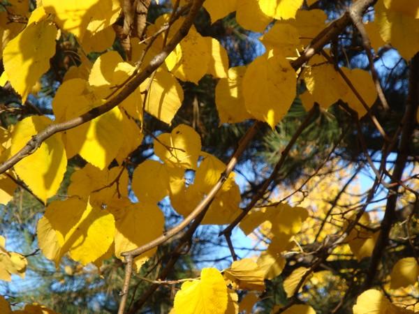 photo-264_novembre.jpg
