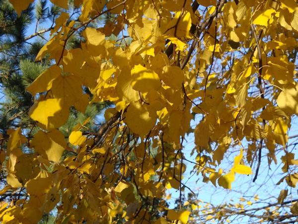 photo-269_novembre.jpg