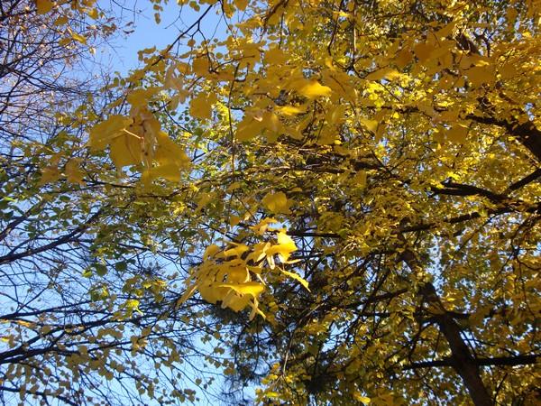 photo-270_novembre.jpg