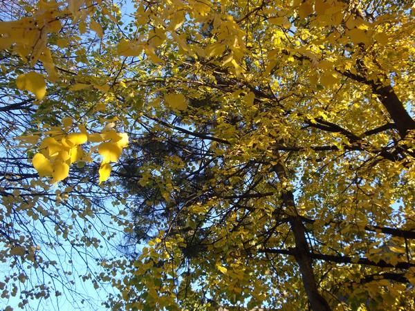 photo-272_novembre.jpg