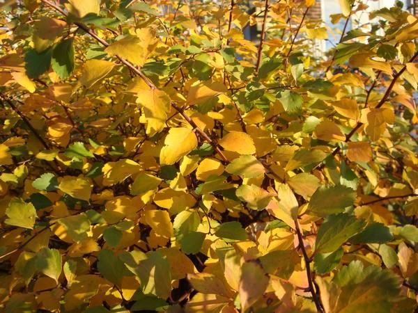 photo-304_novembre.jpg