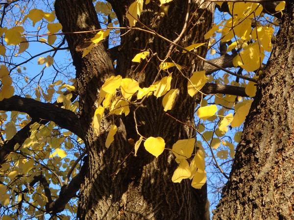 photo-306_novembre.jpg