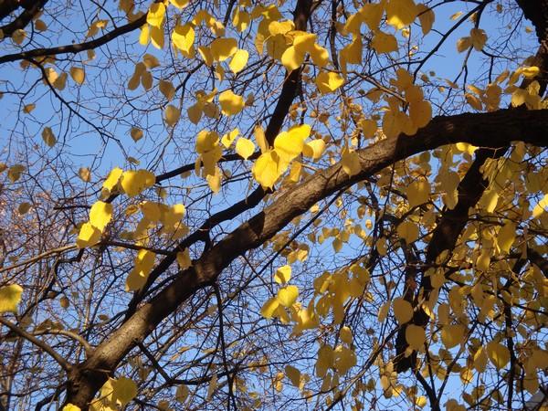 photo-309_novembre.jpg