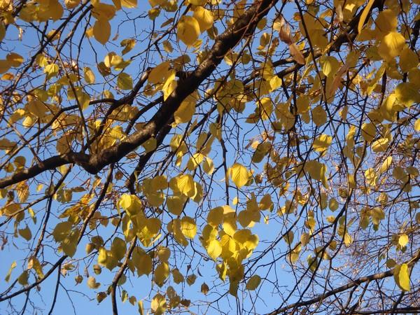 photo-310_novembre.jpg