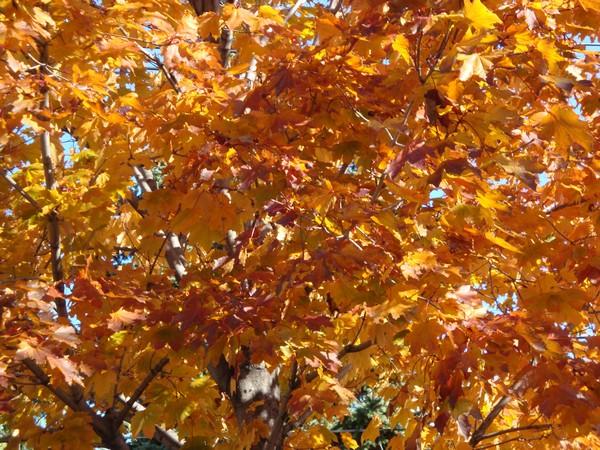 photo-322_novembre.jpg