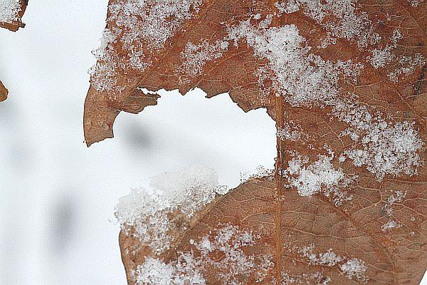 kiki-2010-12-17-divers_2-0178.jpg