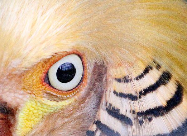 lali-oiseau-clipboard02.jpg