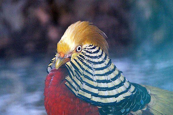 lali-oiseau-entier-img_0080.jpg