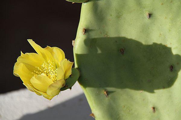 cactus-2011-05-28_0065.jpg