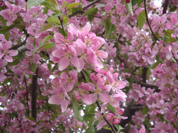 photo-082_mai2011.jpg