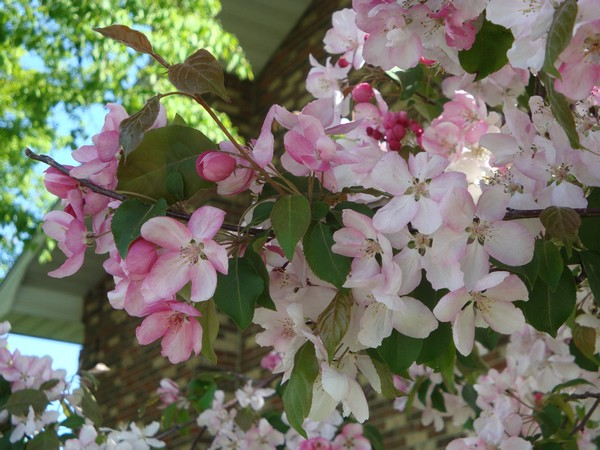 photo-109_mai2011.jpg