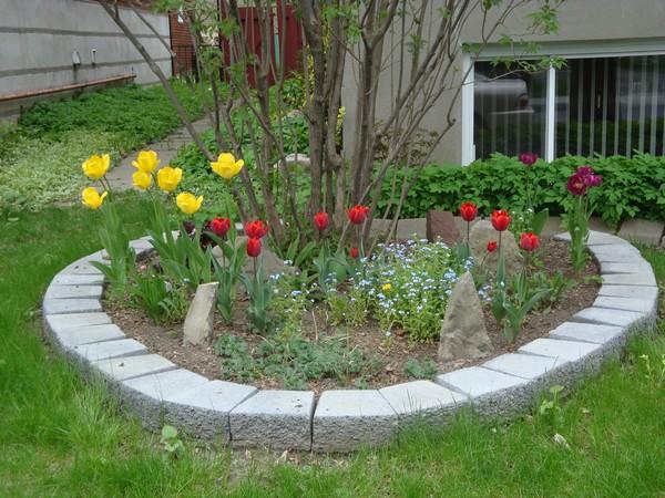 t7_tulipes.jpg