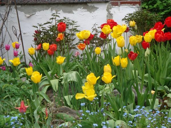 tulipest1.jpg