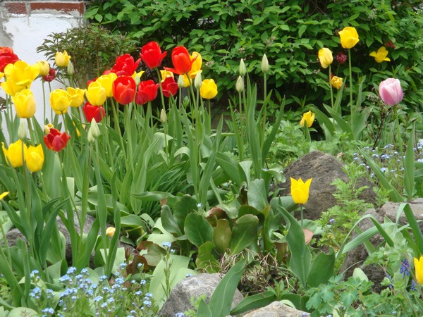 tulipest2.jpg