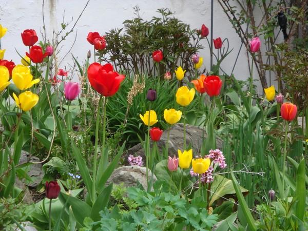 tulipest4.jpg