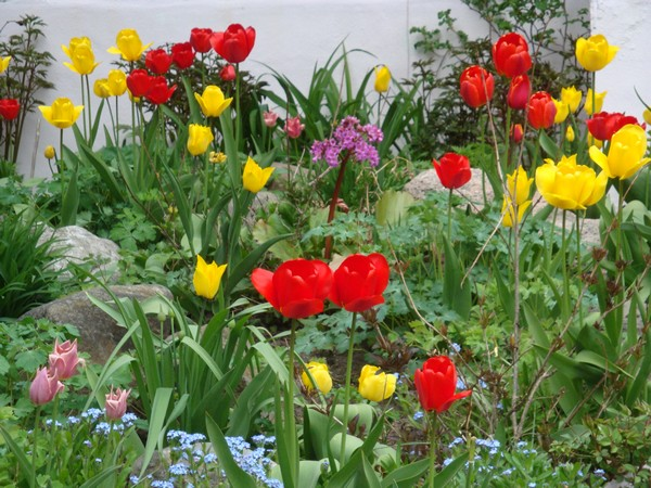 tulipest5.jpg