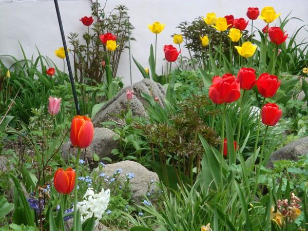 tulipest6.jpg
