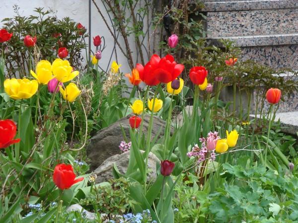 tulipest8.jpg