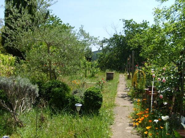 jardin-en-mai-1.JPG