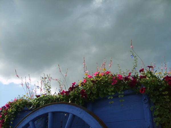 la-roue-le-ciel-les-fleurs.JPG