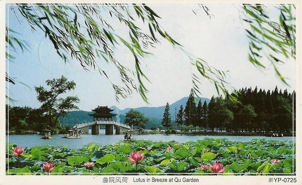 Lotus in Breeze at Qu Garden