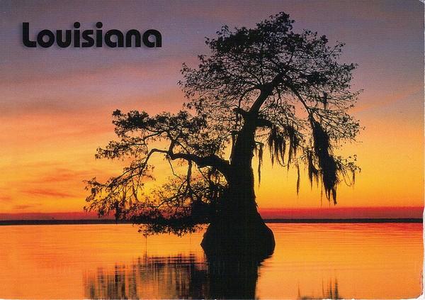 Louisiana ~ Bald Cypress tree at sunset