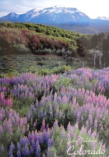 Champ de lupins - Gunnison National Park (Colorado)
