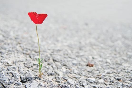 Lonely Poppy - photo de Pupkis
