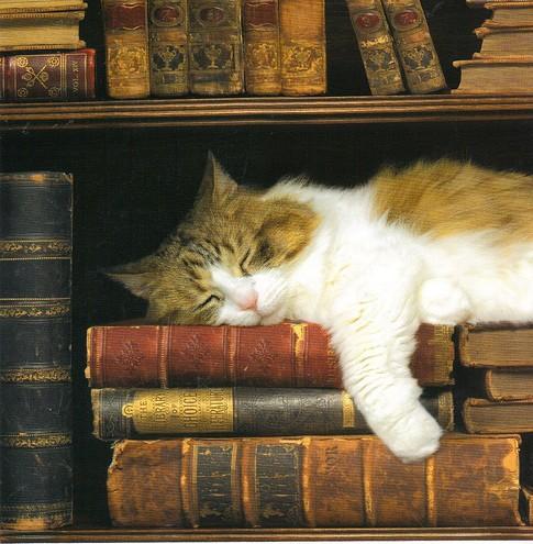 Chat dormant parmi les livres - photo de Nora Moore