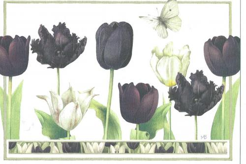 Tulipes noires - illustration de Marjolein Bastein