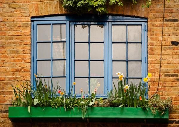Fenêtre fleuries