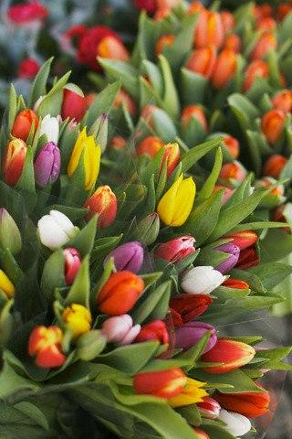 Assortiment de tulipes