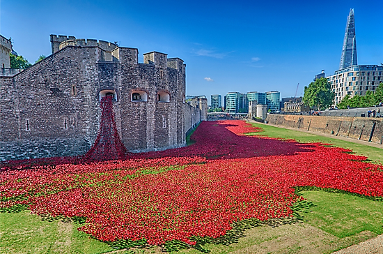 Poppies in the Moat 2 - photo de Chris Thaxter