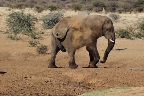 Éléphant prenant un bain de sable, Namibie - photo de Wildebulhiktril